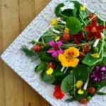Edible flower salad