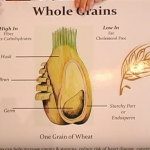 Good Carbohydrates Video by Suzanne Landry